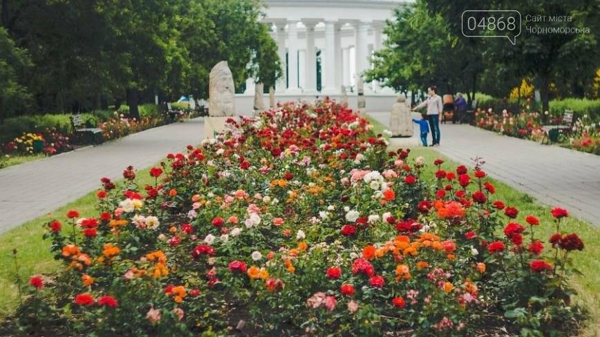 В Черноморске с начала года высажено около 2000 кустов роз (фото), фото-1