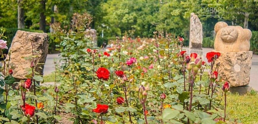 В Черноморске с начала года высажено около 2000 кустов роз (фото), фото-3