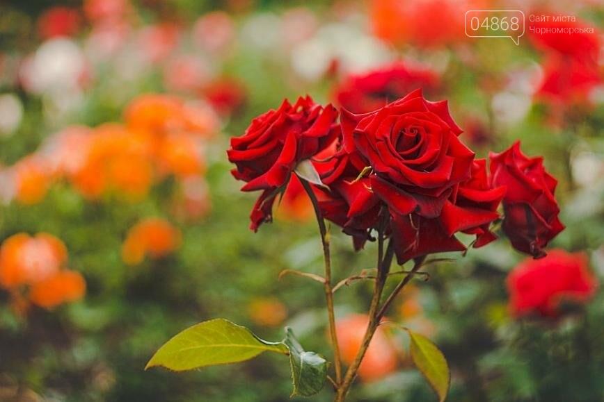 В Черноморске с начала года высажено около 2000 кустов роз (фото), фото-2