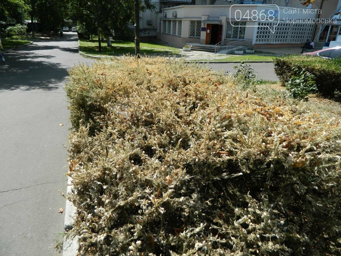 Заражение кустарников в Черноморске (фото), фото-3