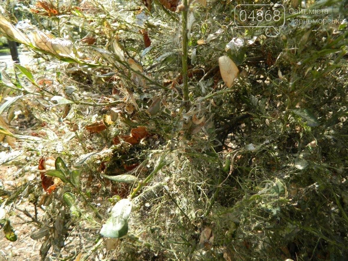 Заражение кустарников в Черноморске (фото), фото-4