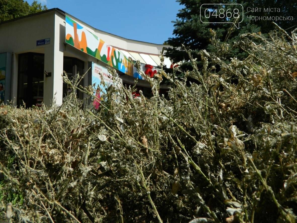 Заражение кустарников в Черноморске (фото), фото-5