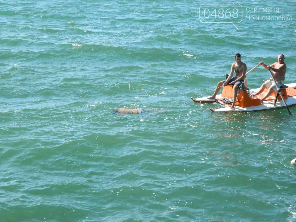 """Вблизи Черноморского """"Яхт-клуба"""" обнаружено тело утопленника (фото), фото-4"""