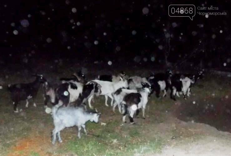 В полиции рассказали о том, как житель Александровки спас свою козу от смерти, фото-1