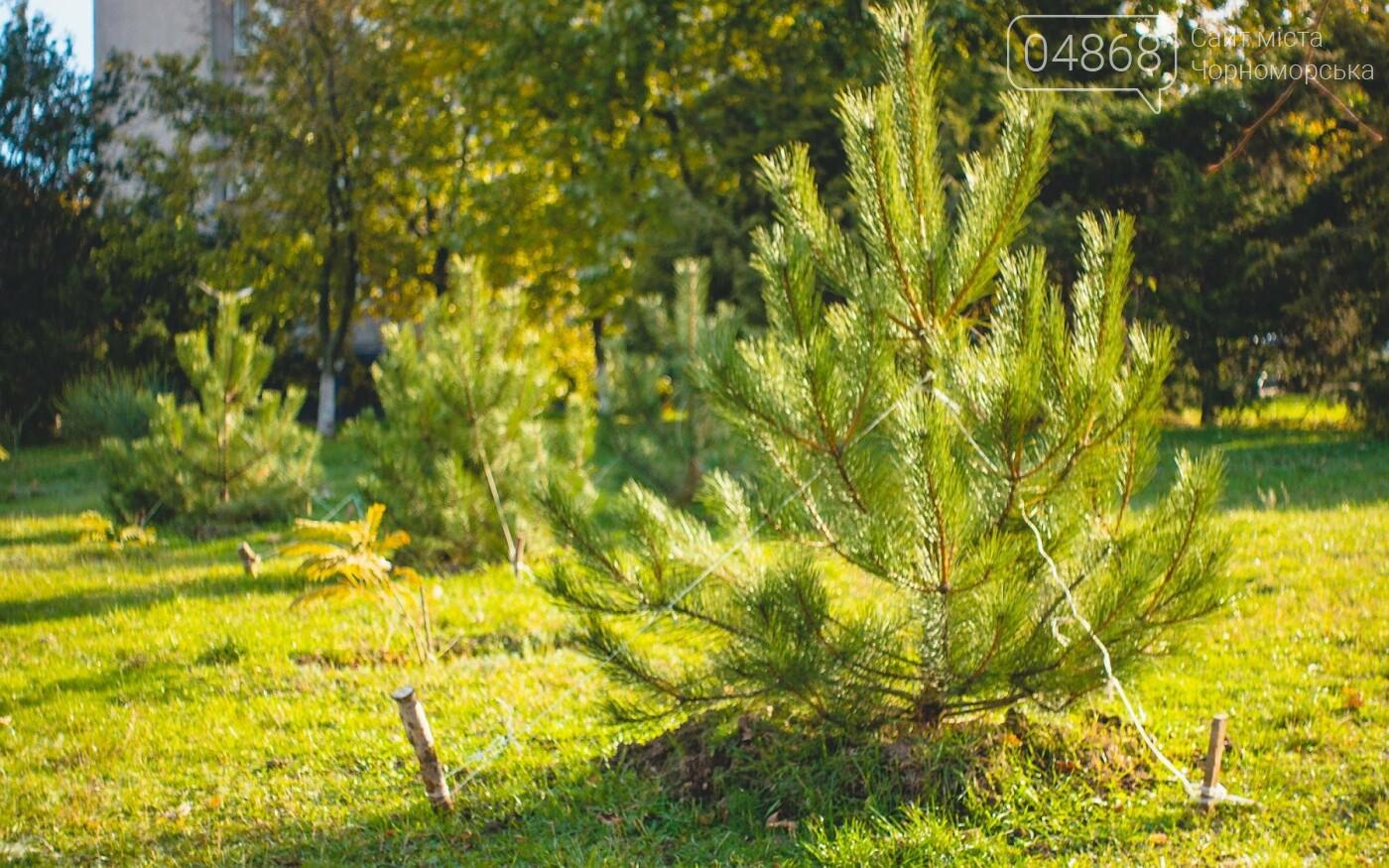 В Черноморске высажено около 1000 новых растений, фото-5