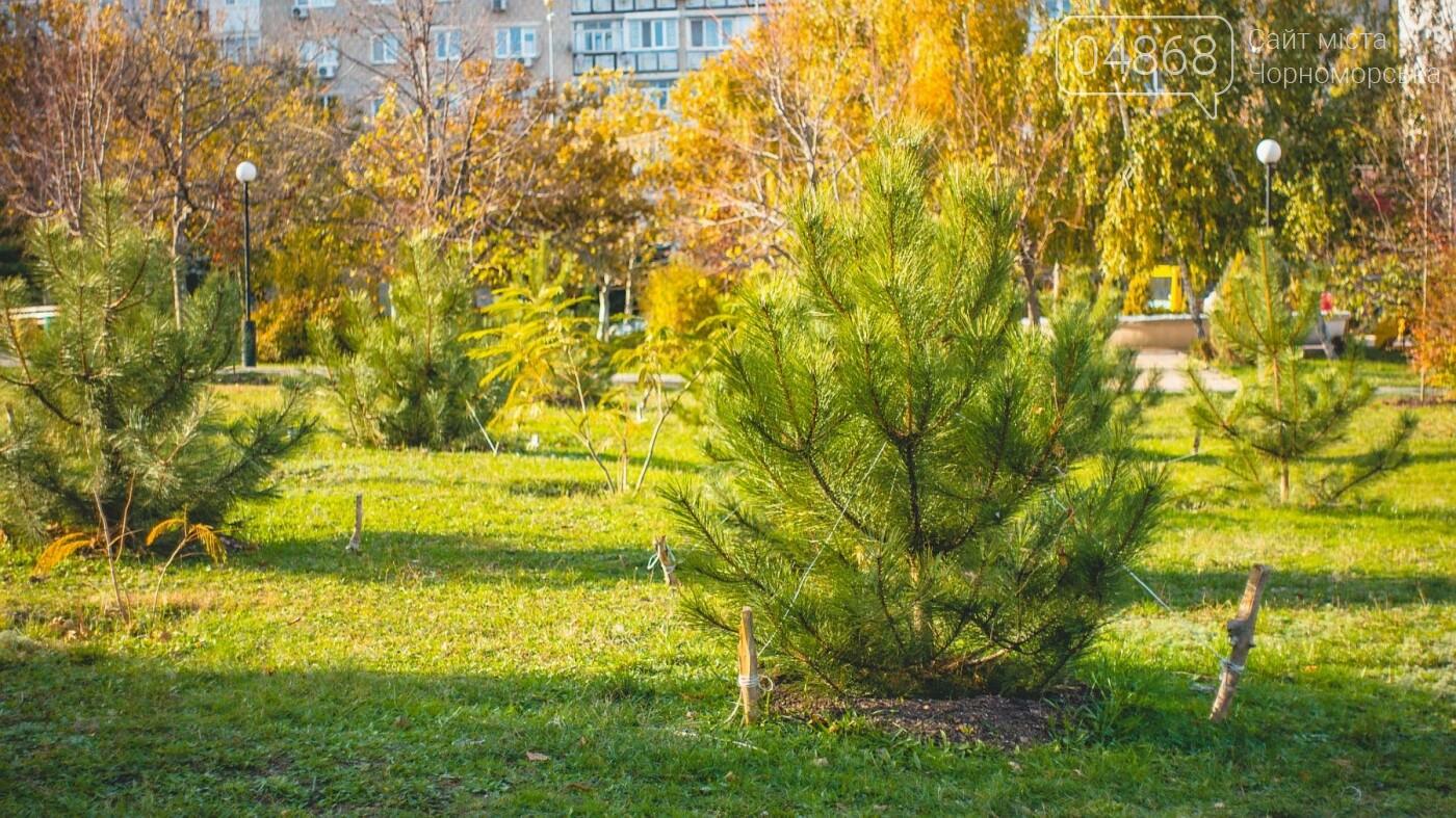 В Черноморске высажено около 1000 новых растений, фото-1