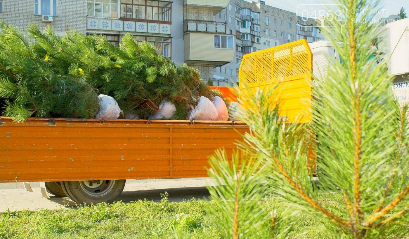 В Черноморске высажено около 1000 новых растений, фото-6