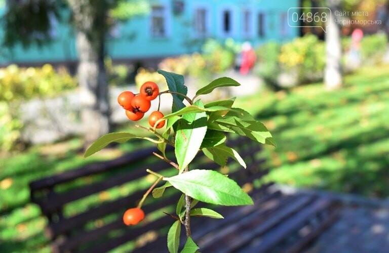 Весной одна из самых красивых аллей Черноморска получит новый зелёный наряд, фото-2