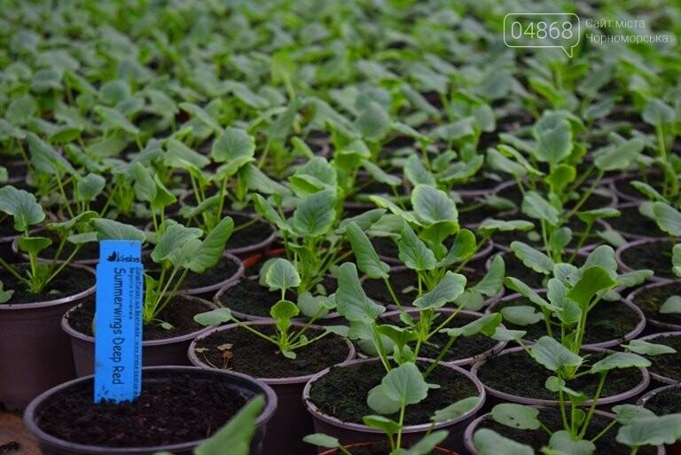 Цветочное царство «Зеленхоза» готовится к весне, фото-3