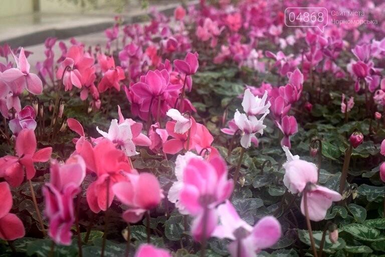 Цветочное царство «Зеленхоза» готовится к весне, фото-4