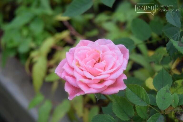Цветочное царство «Зеленхоза» готовится к весне, фото-11