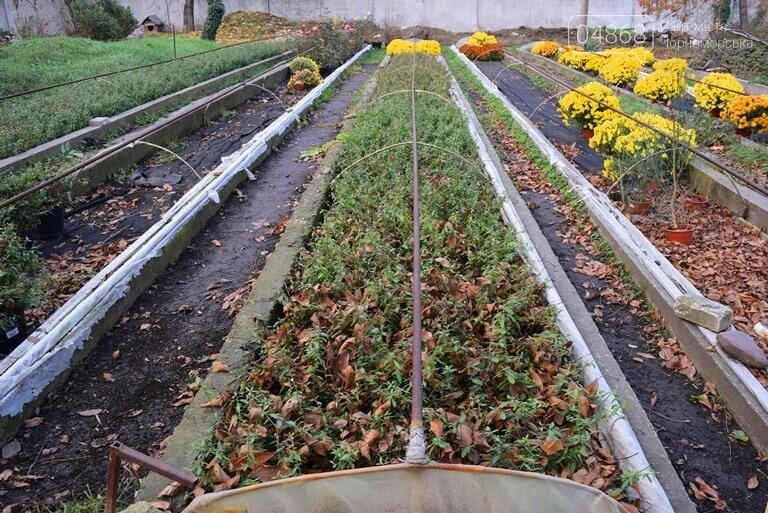 Цветочное царство «Зеленхоза» готовится к весне, фото-10