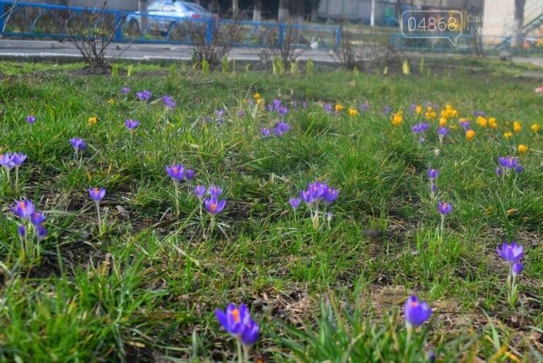 Проект «ЕсоТерапия»: Черноморск наполняют первоцветы, фото-9