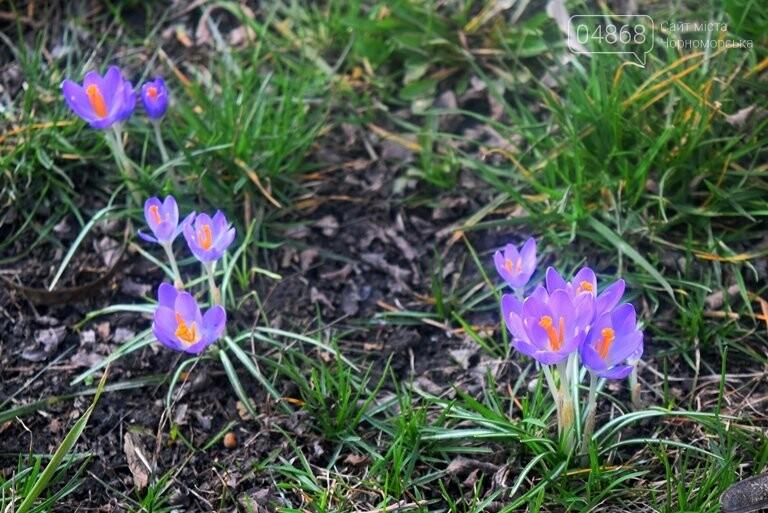 Проект «ЕсоТерапия»: Черноморск наполняют первоцветы, фото-3