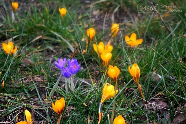 Проект «ЕсоТерапия»: Черноморск наполняют первоцветы, фото-1