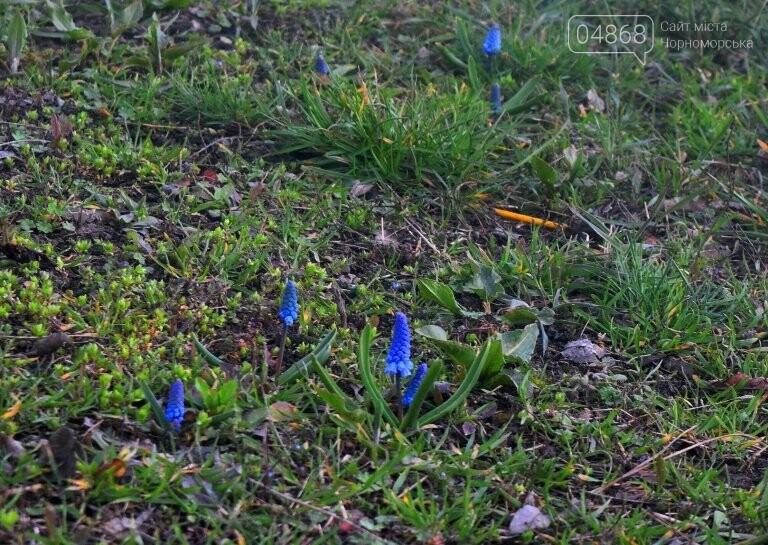 Проект «ЕсоТерапия»: Черноморск наполняют первоцветы, фото-12