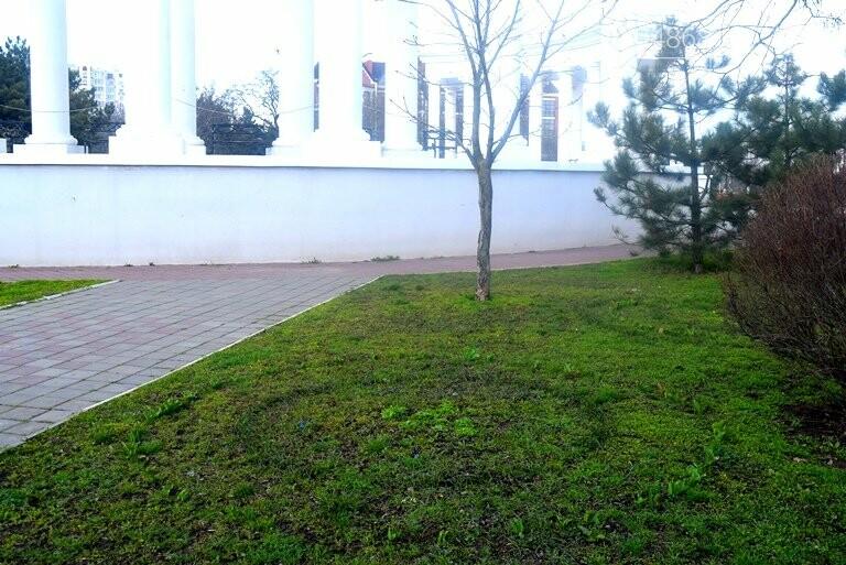 Проект «ЕсоТерапия»: Черноморск наполняют первоцветы, фото-6