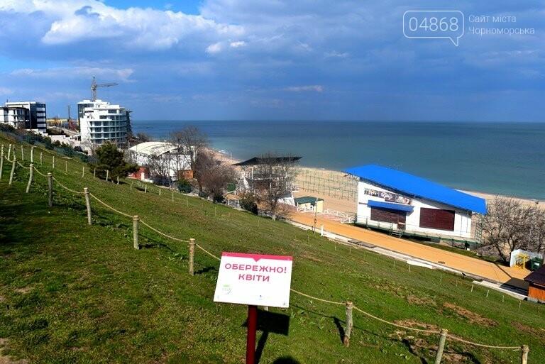 Проект «ЕсоТерапия»: Черноморск наполняют первоцветы, фото-4