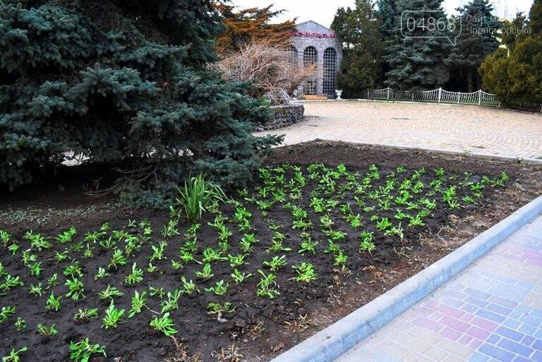 Весне дорогу: первые цветы заполнили клумбы Черноморска, фото-5
