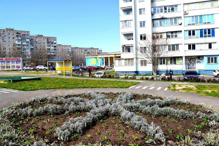 Весне дорогу: первые цветы заполнили клумбы Черноморска, фото-8