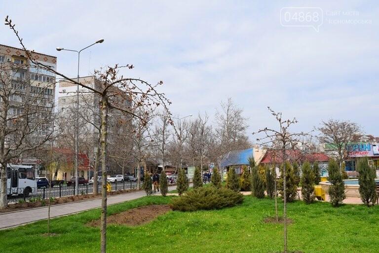 В Черноморске вот-вот расцветут молоденькие сакуры, фото-4