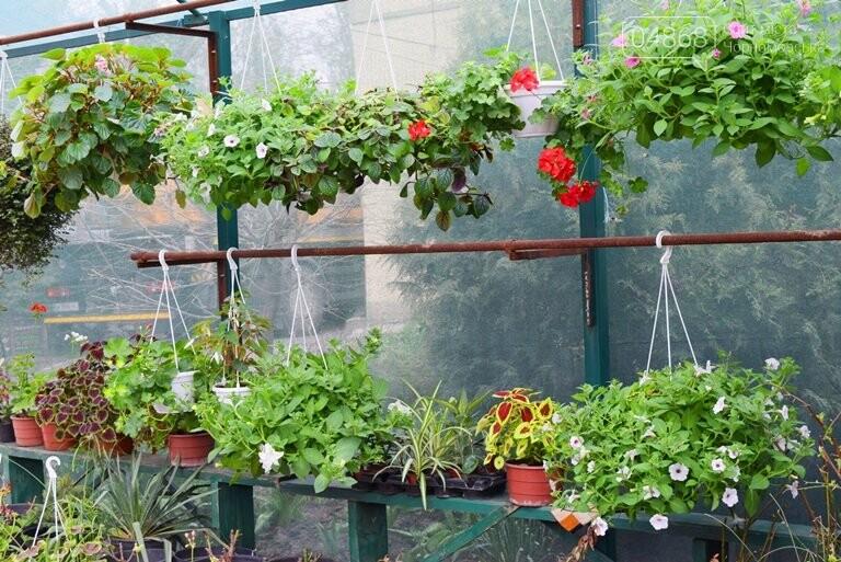 Как сделать двор у дома красивым: мониторинг весенних цен на цветы в Черноморске, фото-9