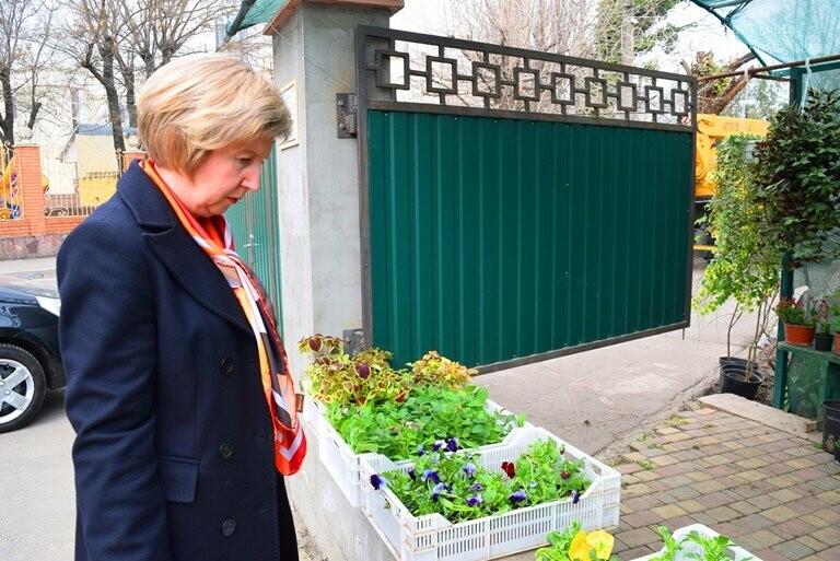 Как сделать двор у дома красивым: мониторинг весенних цен на цветы в Черноморске, фото-10