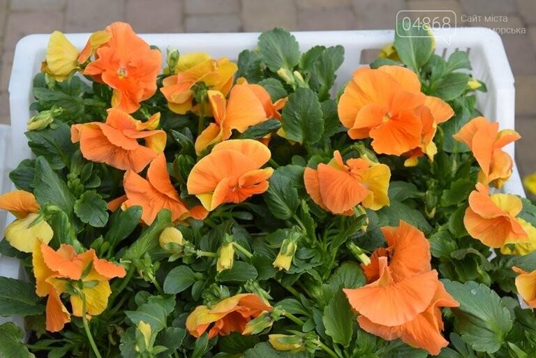 Как сделать двор у дома красивым: мониторинг весенних цен на цветы в Черноморске, фото-1