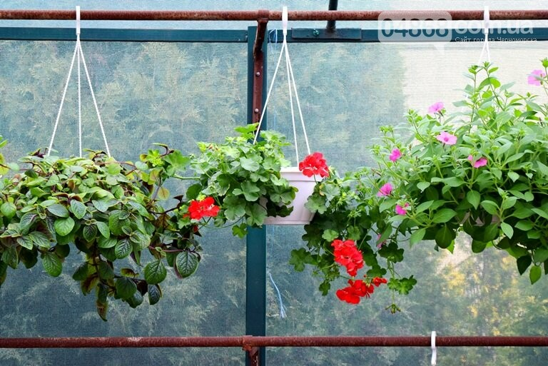 Как сделать двор у дома красивым: мониторинг весенних цен на цветы в Черноморске, фото-11