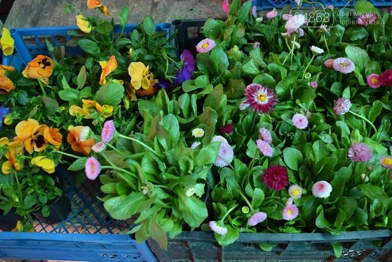 Как сделать двор у дома красивым: мониторинг весенних цен на цветы в Черноморске, фото-12