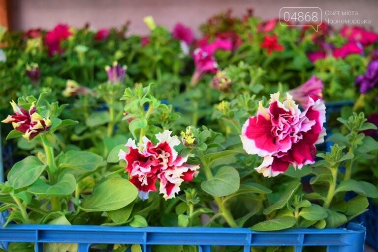 Как сделать двор у дома красивым: мониторинг весенних цен на цветы в Черноморске, фото-3
