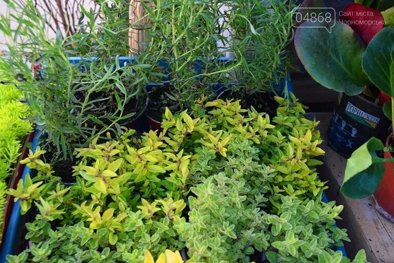 Как сделать двор у дома красивым: мониторинг весенних цен на цветы в Черноморске, фото-21