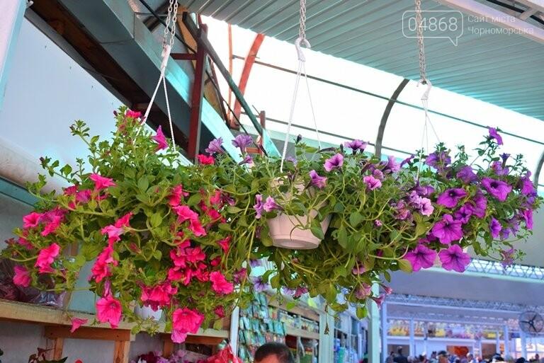 Как сделать двор у дома красивым: мониторинг весенних цен на цветы в Черноморске, фото-14