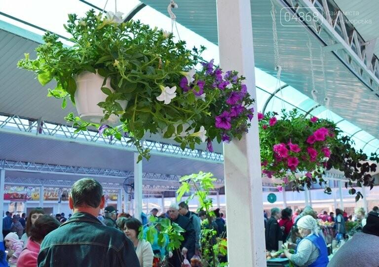 Как сделать двор у дома красивым: мониторинг весенних цен на цветы в Черноморске, фото-2