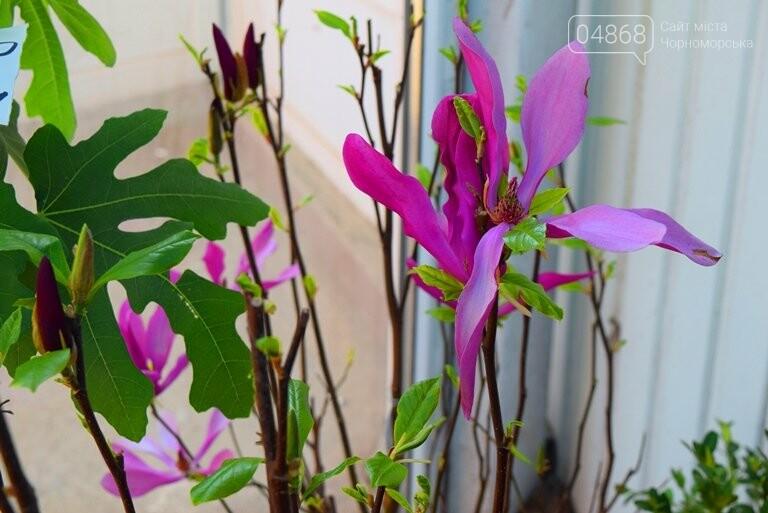 Как сделать двор у дома красивым: мониторинг весенних цен на цветы в Черноморске, фото-6