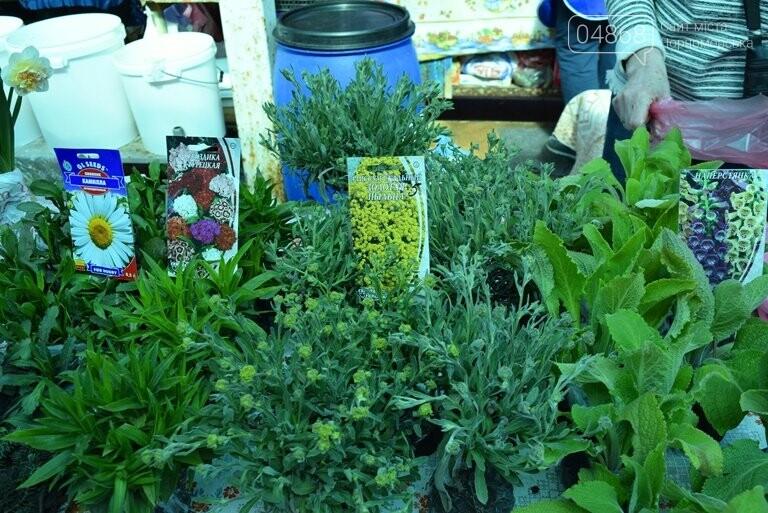 Как сделать двор у дома красивым: мониторинг весенних цен на цветы в Черноморске, фото-16