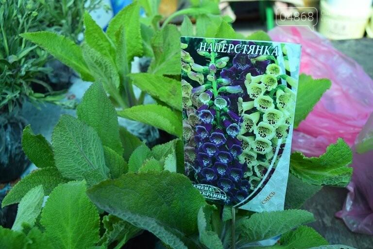 Как сделать двор у дома красивым: мониторинг весенних цен на цветы в Черноморске, фото-7