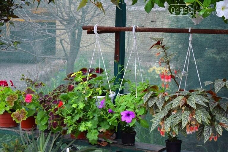 Как сделать двор у дома красивым: мониторинг весенних цен на цветы в Черноморске, фото-19
