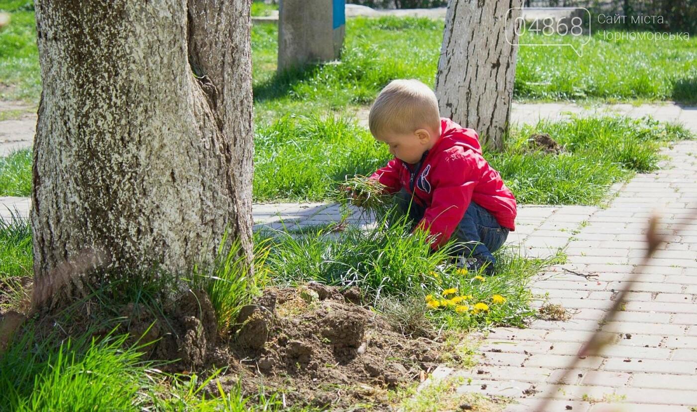 В Черноморске высажено 500 новых деревьев и кустарников, фото-5