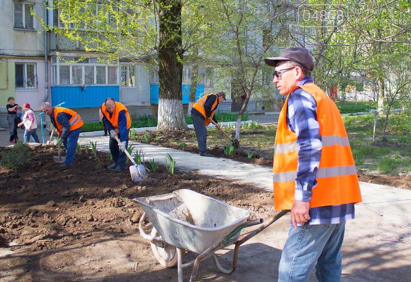 В Черноморске высажено 500 новых деревьев и кустарников, фото-16