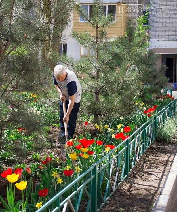 В Черноморске высажено 500 новых деревьев и кустарников, фото-6