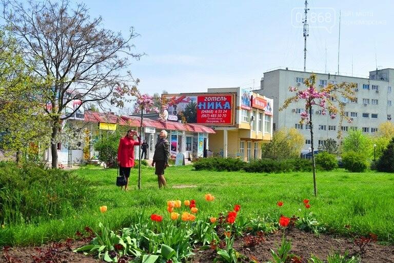 В Черноморске расцвела сакура , фото-4