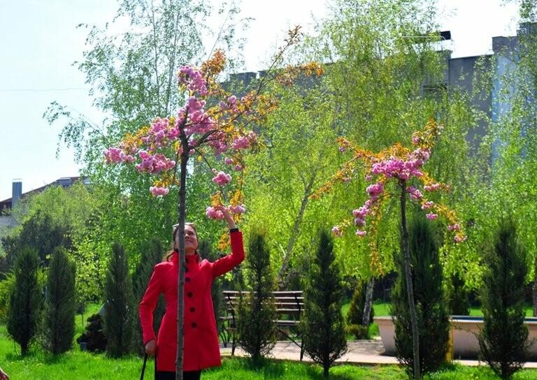 В Черноморске расцвела сакура , фото-6