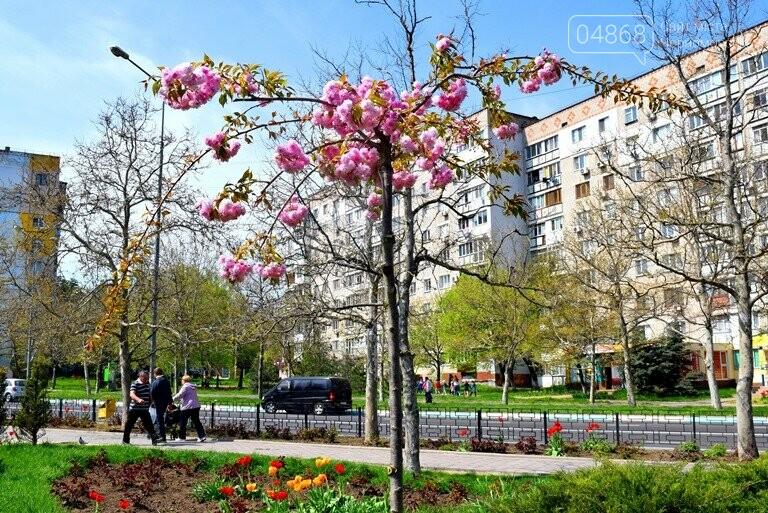 В Черноморске расцвела сакура , фото-7