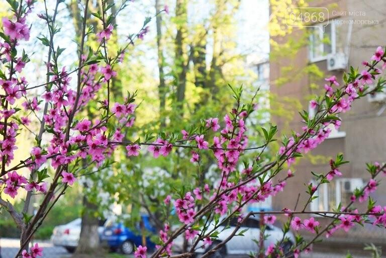На майские праздники в Черноморске будет теплая и солнечная погода, фото-6