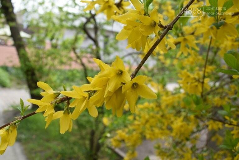 На майские праздники в Черноморске будет теплая и солнечная погода, фото-4