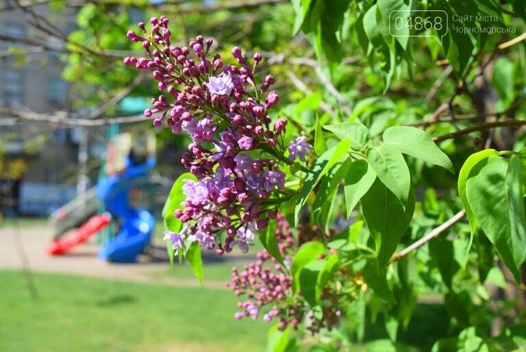 На майские праздники в Черноморске будет теплая и солнечная погода, фото-2