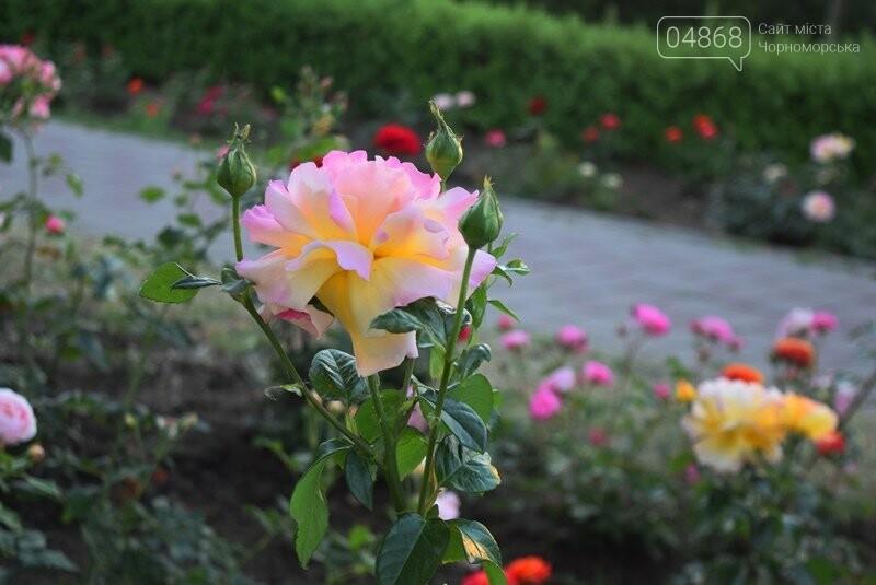 Черноморск – город роз (фоторепортаж), фото-4