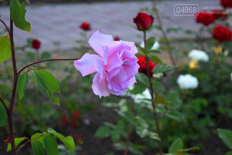 Черноморск – город роз (фоторепортаж), фото-6