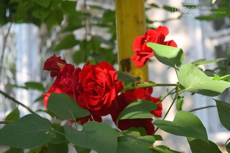 Черноморск – город роз (фоторепортаж), фото-11